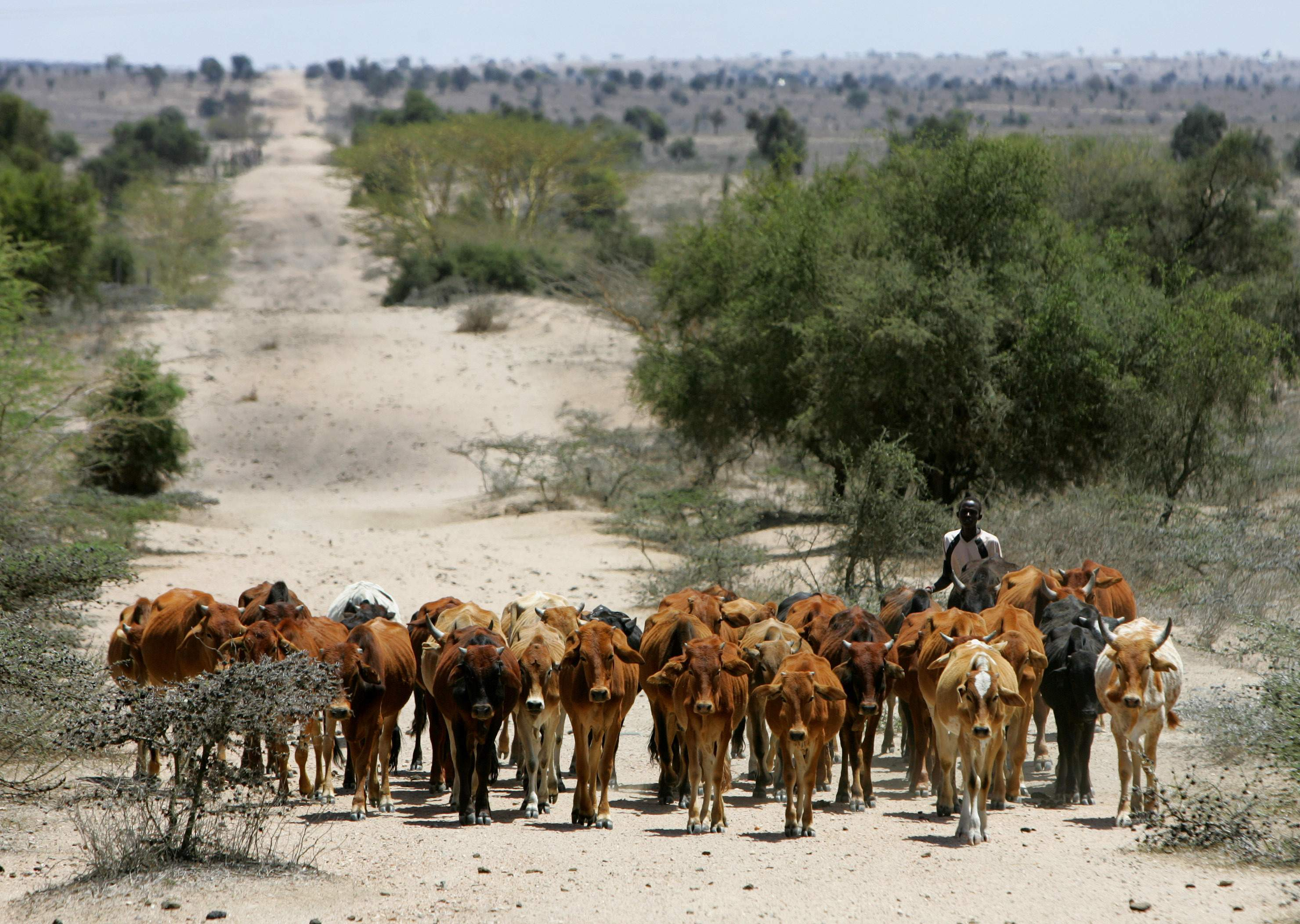drought eastern africa East africa drought in e africa leaves millions in need of aid  failed crops, emaciated cattle, and food shortages are just some of the challenges facing people in east africa as they struggle.
